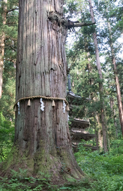 Grandpa Cedar and the Five Storied Pagoda on Mt. Haguro of the Dewa Sanzan
